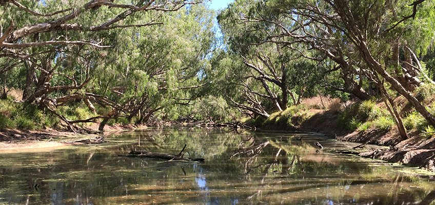 Investments in riparian management in the GBR catchments