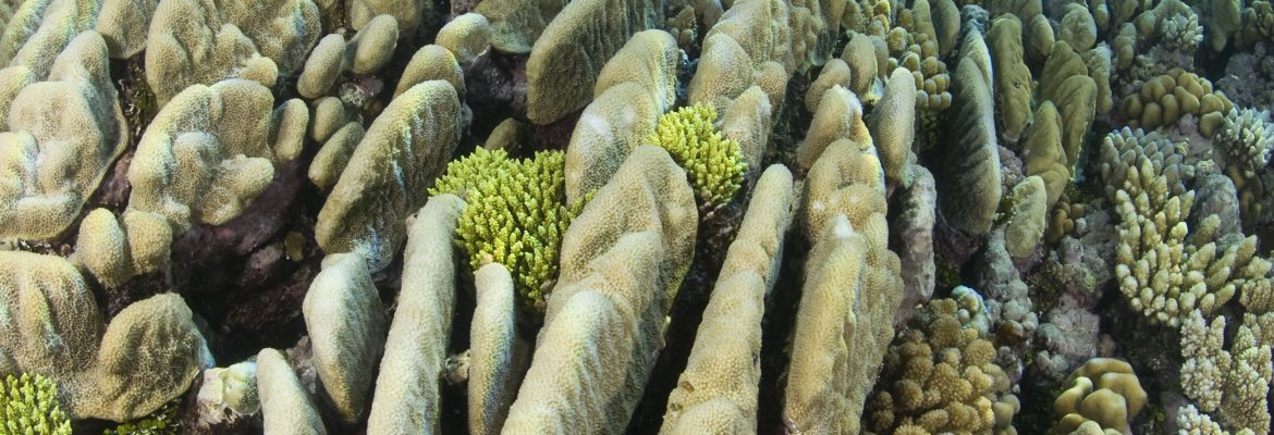 Light in the depths: Measuring benthic irradiance in coral ecosystems